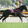【フローラS結果】内田の好騎乗が光った!シングウィズジョイ重賞初勝利!