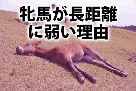 牝馬が長距離に弱い理由